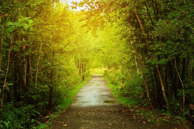 森林の中の小道